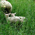 Following Mom by Greta  McLaughlin