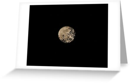 Super Moon 05/05/2012 by jim1911