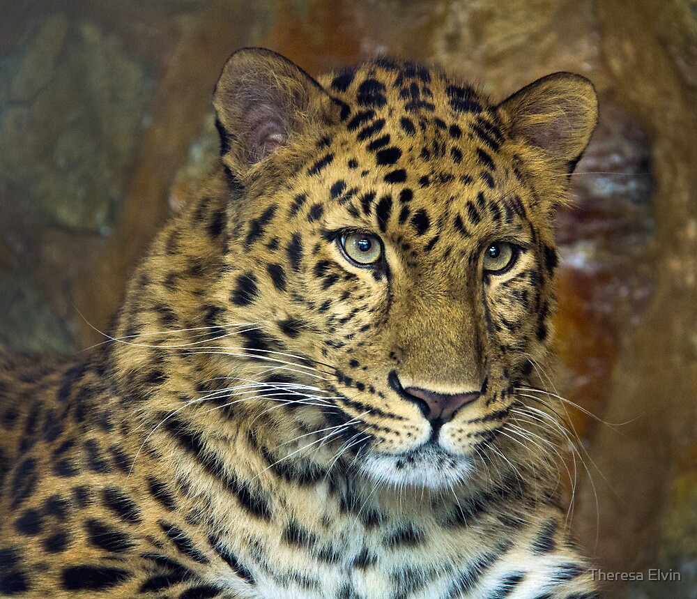 Amur Leopard by Theresa Elvin