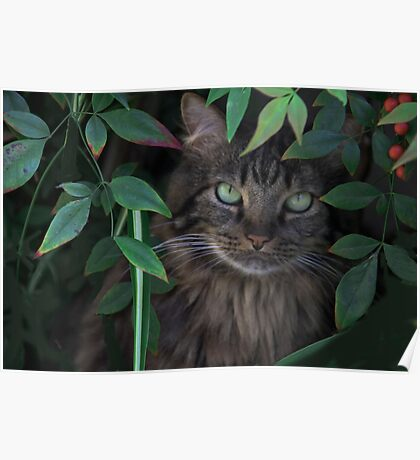 Hiding in the Bushes Poster