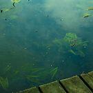 Näckrosen Lake  by George Limitsios