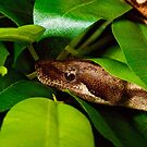 Searching through the leave's Boa Constrictor by thermosoflask