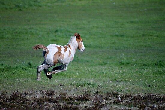 Run Like the Wind by Ladymoose