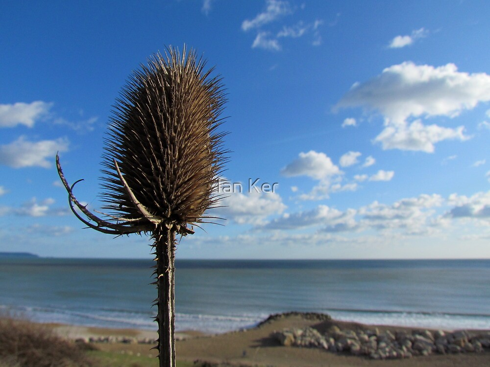 She Sells Teasel on the Seashore by Ian Ker