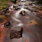 Kaiate Autumn Reds by Ken Wright