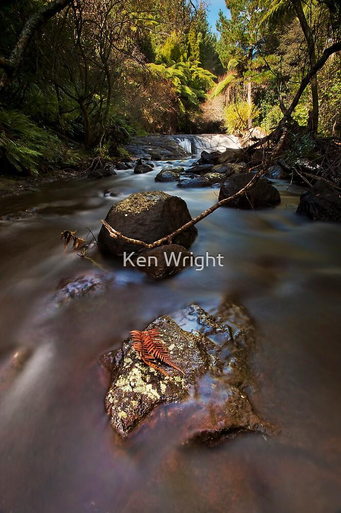 Kaiate copper ferns by Ken Wright