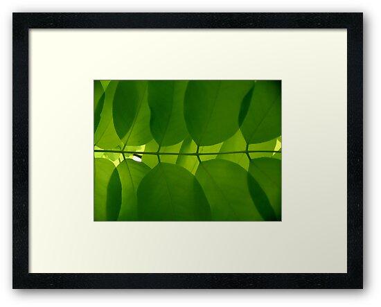 Symmetry by Kitsmumma