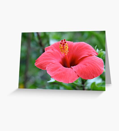 Standing out from the rest Greeting Card