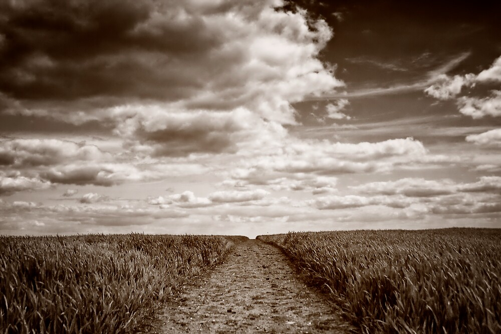 Field Walks by Vicki Field