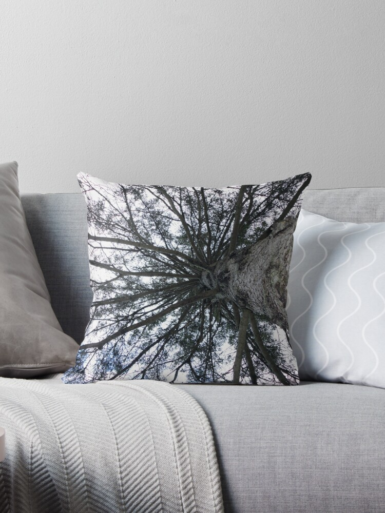 Maine Blue Spruce by AuntyReni