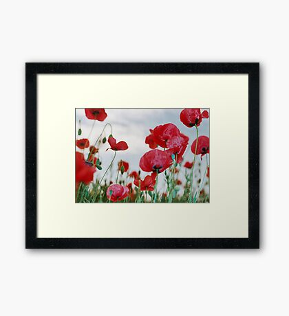 Field of Poppies Against Grey Sky  Framed Print