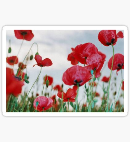 Field of Poppies Against Grey Sky  Sticker