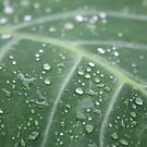 Water drops on a leaf by DutchLumix
