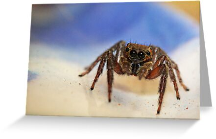 Small Jumping Spider by robynart