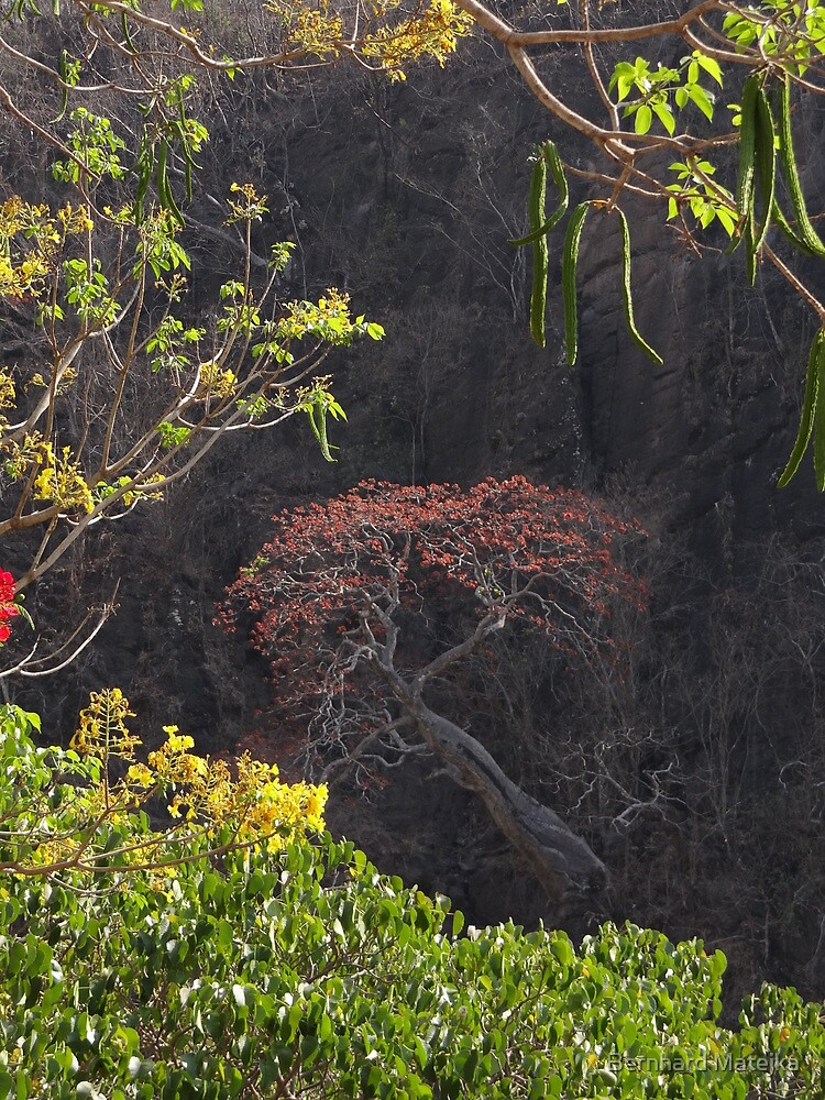 Blooming Tree On The Rock Wall - Arbol Floreando En El Acantilado by Bernhard Matejka