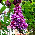 A Spring Bloom! by DCLehnsherr