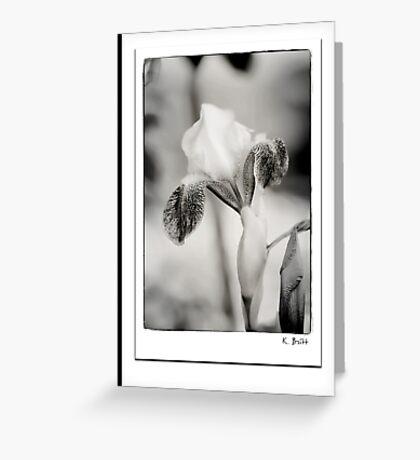 Iris in Black & White Greeting Card
