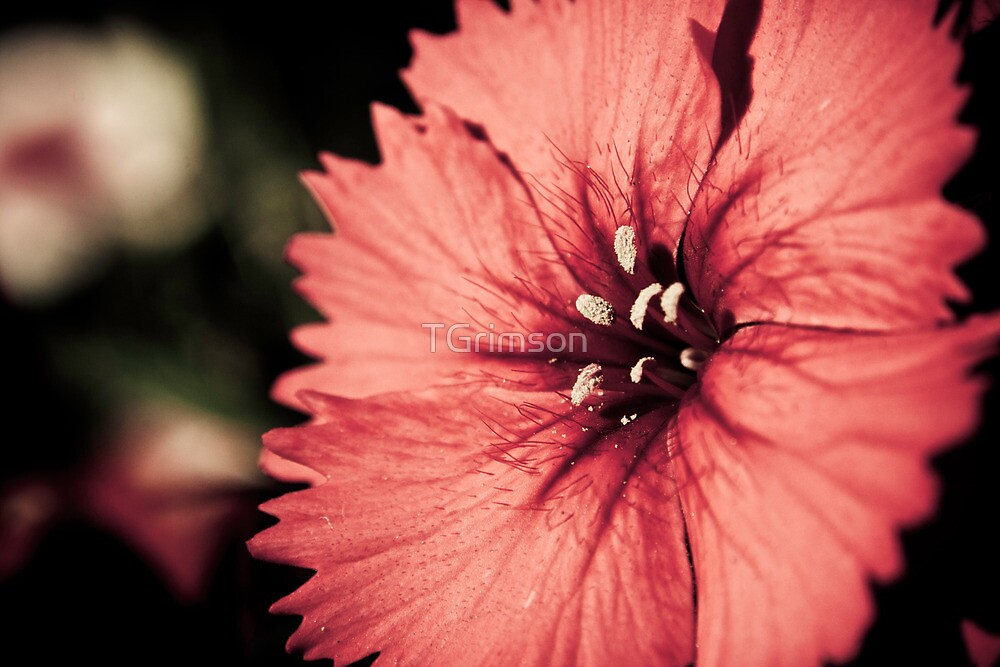 Moon Flower by TGrimson