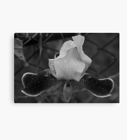 black and white flower along fence line  Canvas Print