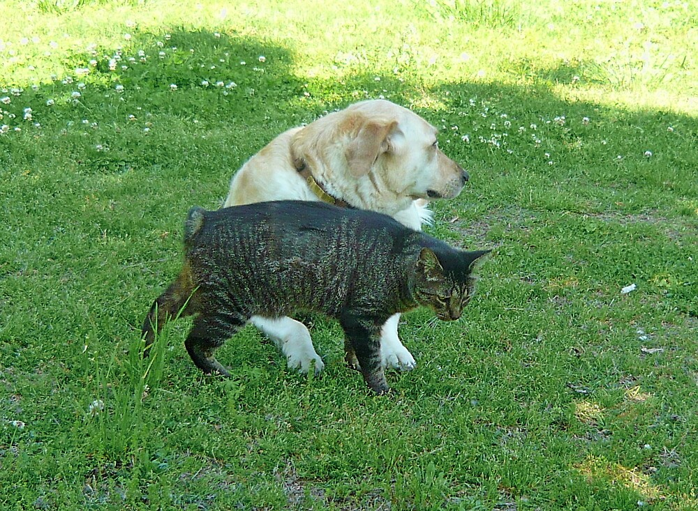 Yellow Lab and Bobtail Tabby by Vivian Eagleson