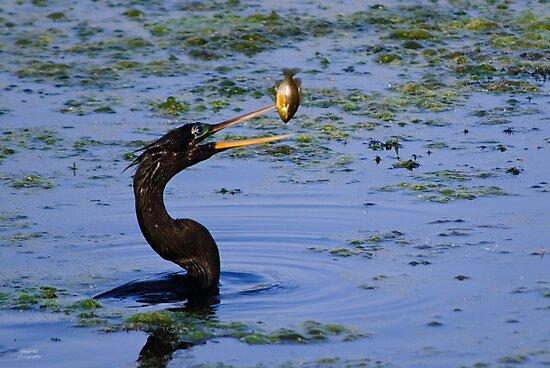 A Birds Breakfast by Diego Re