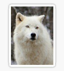 Arctic Wolf Close Up Sticker