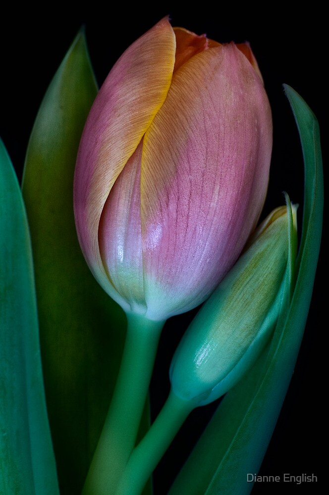 Blossoming Friendship by Dianne English