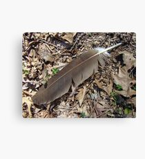 Turkey Vulture Feather - Cathartes aura Canvas Print