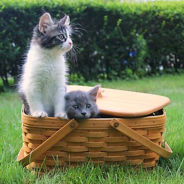 Cute Kittens Escaping from Basket by anitahiltz