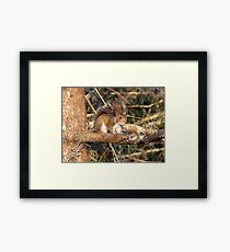 Just a Squirrel Framed Print