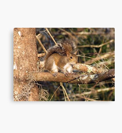 Just a Squirrel Canvas Print