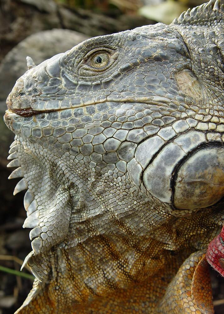 Red Iguana by Guatemwc