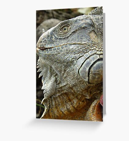 Red Iguana Greeting Card