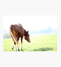 Just Grazin' Photographic Print