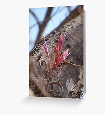 Epiphyte I - Epifita Greeting Card