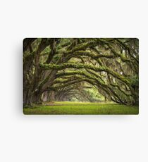 Avenue of Oaks - Charleston SC Plantation Live Oaks Canvas Print
