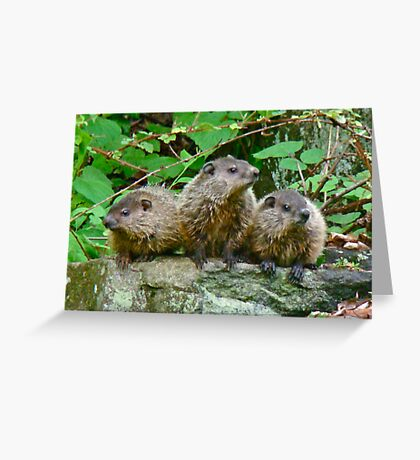 A Trio of Trouble   Greeting Card