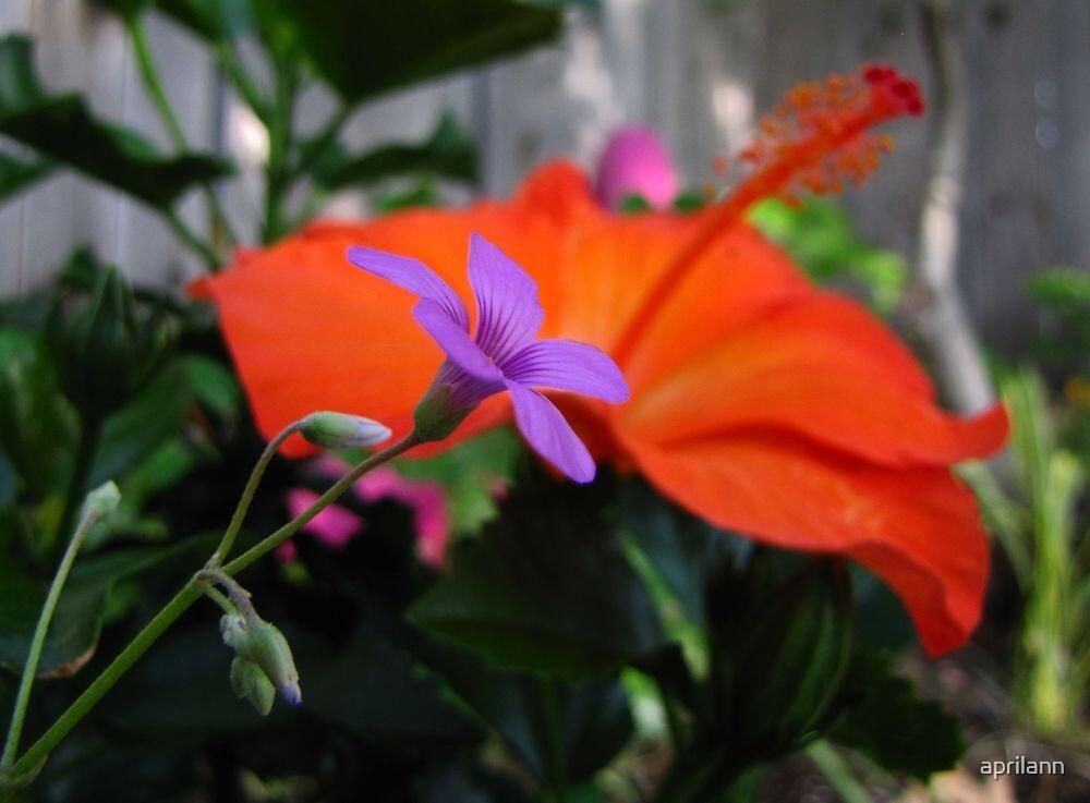 Sharing the Garden by aprilann