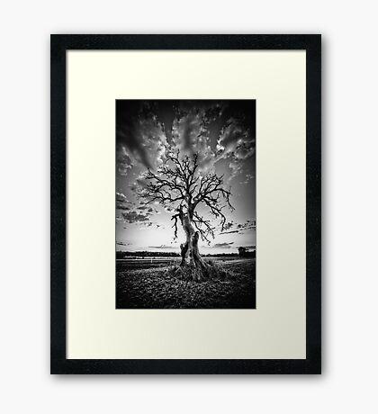Hamilton Tree Framed Print