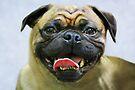 Pug Portrait by Laurie Minor