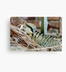 Lizard having a meal Canvas Print