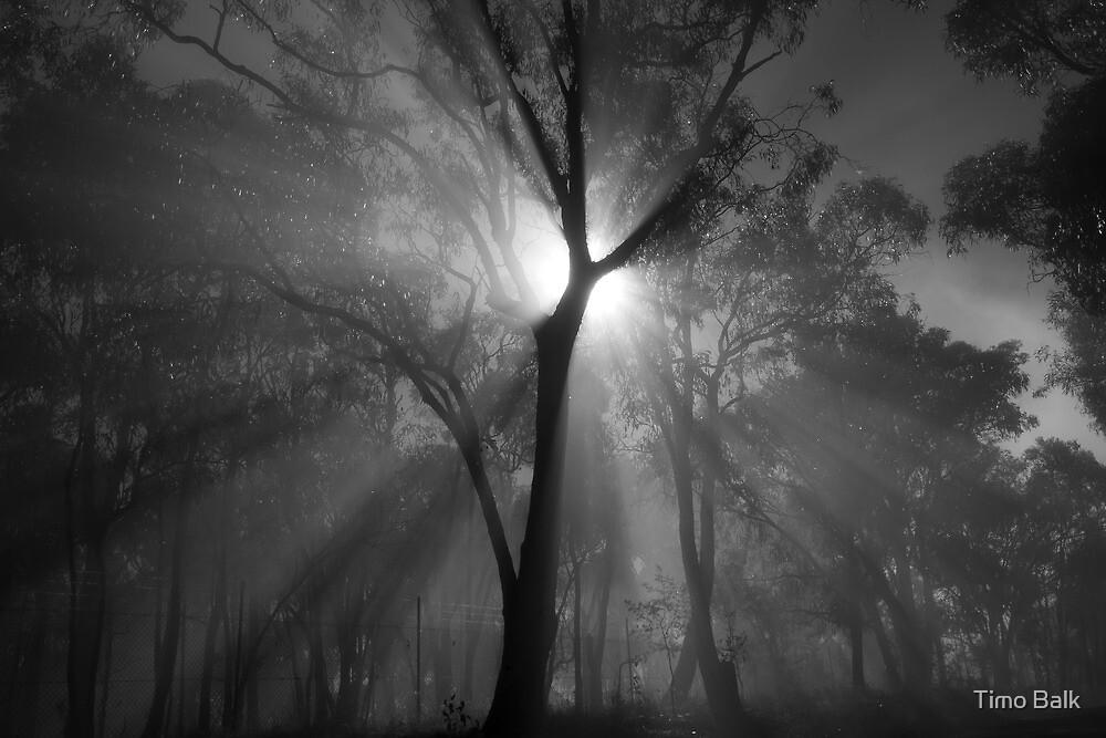 The Sunburst by Timo Balk
