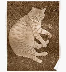 Fat Cat In the Grass Poster