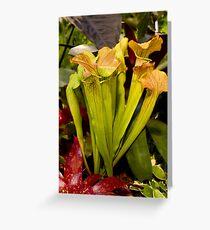 Peridot coloured cobra lilies Greeting Card