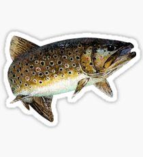 Rainbow Trout Fish Sticker Sticker