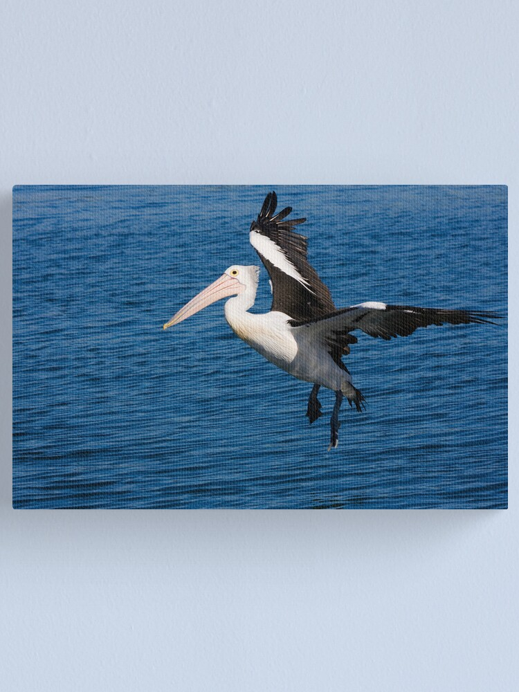 Alternate view of Pelican at Wagonga Inlet, Narooma Canvas Print