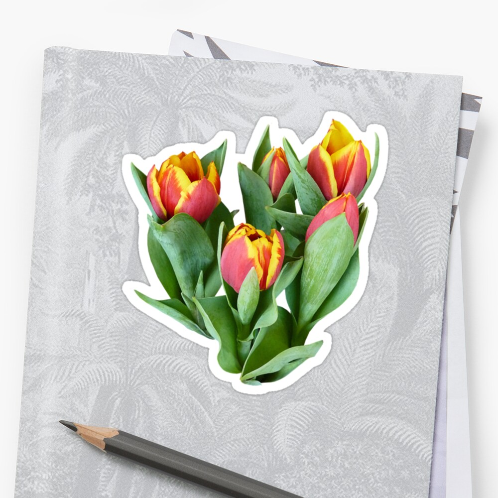 Tulips Just Opening by Susan Savad