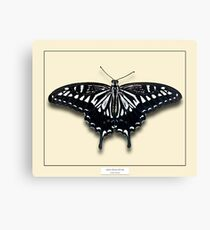 Asian Swallowtail Butterfly - Specimen style print Canvas Print