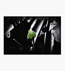 Green Shining Photographic Print