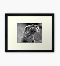 Asian small-clawed otter (Aonyx cinerea) Framed Print